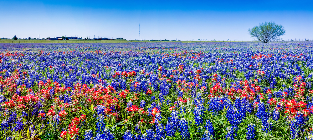 5 Of The Most Scenic Destinations In Texas