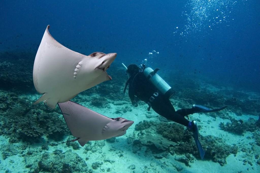 5 Best Grand Cayman Scuba Diving Spots