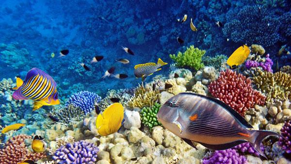 4 Best Scuba Diving Locations In Boracay Islands