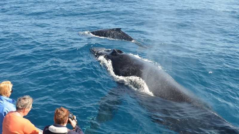 4 Things You Need To Know About Whale Watching